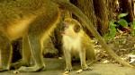 Bijilo Forest Park, Serrekunda